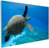Groene zwemmende schildpad  Glas 90x60 cm - Foto print op Glas (Plexiglas wanddecoratie)