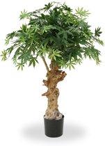 Maxifleur Planten 153208