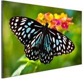 Blauwe Tijger vlinder Aluminium 90x60 cm - Foto print op Aluminium (metaal wanddecoratie)