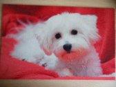 Deurmat 40x60 Bichon puppy