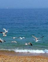 Beach Sand Dune Sandy Shell Shells Ocean Sea Marine Biology Water Swimming Pool