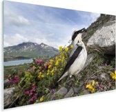 Foto van een tapuit met bergen op de achtergrond Plexiglas 90x60 cm - Foto print op Glas (Plexiglas wanddecoratie)