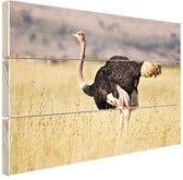 FotoCadeau.nl - Struisvogel in de natuur Hout 60x40 cm - Foto print op Hout (Wanddecoratie)