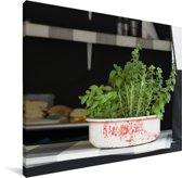 Culinaire oregano in een moestuintje Canvas 40x30 cm - klein - Foto print op Canvas schilderij (Wanddecoratie woonkamer / slaapkamer)