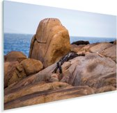 Kliffen langs de oceaan in het Nationaal park Cabo Polonio in Uruguay Plexiglas 60x40 cm - Foto print op Glas (Plexiglas wanddecoratie)