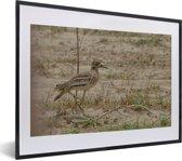 Foto in lijst - Mooie griel op een steppe fotolijst zwart met witte passe-partout klein 40x30 cm - Poster in lijst (Wanddecoratie woonkamer / slaapkamer)
