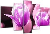 Glasschilderij Tulp | Paars, Wit, Zwart | 170x100cm 5Luik | Foto print op Glas |  F003895