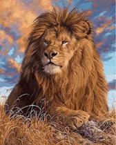Schilderen op nummer leeuw 40 x 50 cm