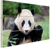 Reuzenpanda Hout 30x20 cm - klein - Foto print op Hout (Wanddecoratie)