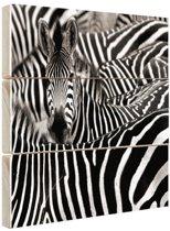 Zebra zwart-wit  Hout 120x80 cm - Foto print op Hout (Wanddecoratie)