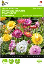 Strobloem - Helichrysum bracteatum - set van 8 stuks