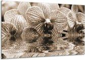Glasschilderij Orchidee | Sepia, Bruin | 120x70cm 1Luik | Foto print op Glas |  F001877
