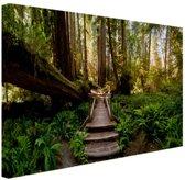 Trap van gevallen bomen in jungle Canvas 80x60 cm - Foto print op Canvas schilderij (Wanddecoratie)