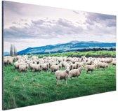 Kudde schapen  Aluminium 90x60 cm - Foto print op Aluminium (metaal wanddecoratie)