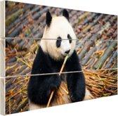 Reuzepanda die bamboe eet Hout 120x80 cm - Foto print op Hout (Wanddecoratie)