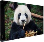Panda die bamboe eet Canvas 120x80 cm - Foto print op Canvas schilderij (Wanddecoratie woonkamer / slaapkamer) / Dieren Canvas Schilderijen
