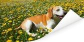 Beagle die tussen de gele bloemen ligt Poster 150x75 cm - Foto print op Poster (wanddecoratie woonkamer / slaapkamer) / Huisdieren Poster