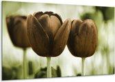 Glasschilderij Tulpen   Bruin, Groen   120x70cm 1Luik   Foto print op Glas    F002793