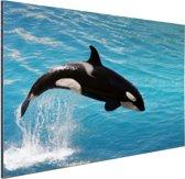 FotoCadeau.nl - Springende kleine orka Aluminium 120x80 cm - Foto print op Aluminium (metaal wanddecoratie)