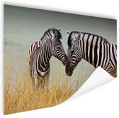 Zebras  Poster 150x75 cm - Foto print op Poster (wanddecoratie woonkamer / slaapkamer) / Dieren Poster