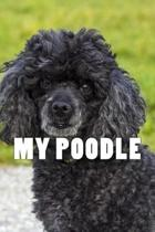My Poodle (Journal / Notebook)