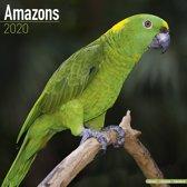 Amazons Calendar 2020