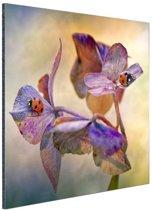 Twee lieveheersbeestjes op bloemen Aluminium 90x60 cm - Foto print op Aluminium (metaal wanddecoratie)