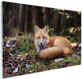 Rustende vos Glas 30x20 cm - klein - Foto print op Glas (Plexiglas wanddecoratie)