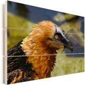 Portretfoto van een lammergier Vurenhout met planken 90x60 cm - Foto print op Hout (Wanddecoratie)