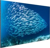 School met vissen Aluminium 30x20 cm - Foto print op Aluminium (metaal wanddecoratie)
