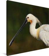 Portretfoto van een lepelaar Canvas 50x50 cm - Foto print op Canvas schilderij (Wanddecoratie woonkamer / slaapkamer)