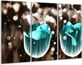 Glasschilderij Tulp | Blauw, Grijs | 120x80cm 3Luik | Foto print op Glas |  F005156