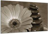 Schilderij | Canvas Schilderij Bloem, Stenen | Sepia | 120x70cm 1Luik | Foto print op Canvas