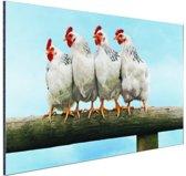 Vier Kippen op stok Aluminium 120x80 cm - Foto print op Aluminium (metaal wanddecoratie)