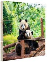 Spelende pandas Hout 20x20 cm - klein - Foto print op Hout (Wanddecoratie)