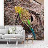 Fotobehang vinyl - Fascinerende grasparkiet dichtbij zijn nestje breedte 360 cm x hoogte 360 cm - Foto print op behang (in 7 formaten beschikbaar)