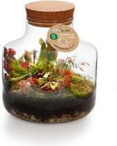 Ecoworld Swamp Biosphere - Basic Glas - Eco-Systeem - 3 Vleesetende Planten + Complete DIY set