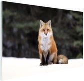 Rode vos in de sneeuw Glas 90x60 cm - Foto print op Glas (Plexiglas wanddecoratie)
