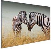 Zebras  Aluminium 90x60 cm - Foto print op Aluminium (metaal wanddecoratie)