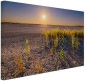 Droge woestijn met plantjes  Canvas 120x80 cm - Foto print op Canvas schilderij (Wanddecoratie)