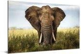 Afrikaanse olifant in het gras in het Nationaal park Serengeti Aluminium 180x120 cm - Foto print op Aluminium (metaal wanddecoratie) XXL / Groot formaat!