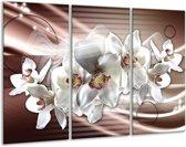 Glas schilderij Orchidee, Bloemen | Grijs, Bruin | 120x80cm 3Luik | Foto print op Glas |  F007813