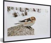 Foto in lijst - Een sneeuwgors op een steen in de sneeuw fotolijst zwart met witte passe-partout 60x40 cm - Poster in lijst (Wanddecoratie woonkamer / slaapkamer)