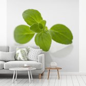 Fotobehang vinyl - Close up van de groene oregano bladeren breedte 240 cm x hoogte 240 cm - Foto print op behang (in 7 formaten beschikbaar)