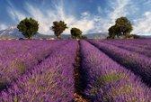 Papermoon Lavender Field Vlies Fotobehang 250x186cm 5-Banen