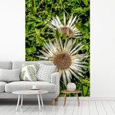 Fotobehang vinyl - Twee zilverdistels met een groene omgeving breedte 200 cm x hoogte 300 cm - Foto print op behang (in 7 formaten beschikbaar)
