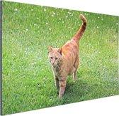 Rode kater in het gras Aluminium 180x120 cm - Foto print op Aluminium (metaal wanddecoratie) XXL / Groot formaat!