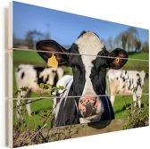 Een Friese koe kijkend over het hek Vurenhout met planken 60x40 cm - Foto print op Hout (Wanddecoratie)