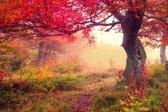 Papermoon Autumn Trees Vlies Fotobehang 350x260cm 7-Banen