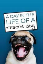 A Day in the Life of a Rescue Dog